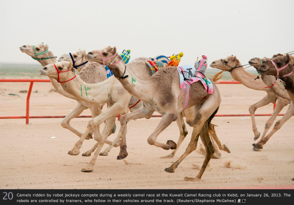 クウェートのラクダ・レースで使われているロボット騎手(http://www.theatlantic.com/より)