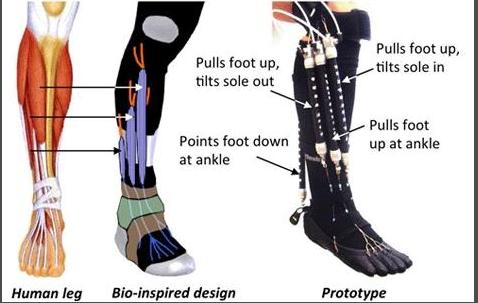 人間の筋肉を真似た人工筋肉で、足首も自然近く回転する(http://www.cmu.edu/より)