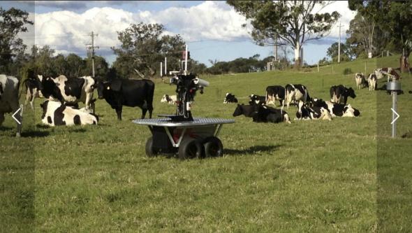 シドニー大学で開発された牛の群れを追うロボット(http://www.illawarramercury.com.au/より)
