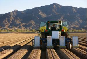 ぶる・リバー・テクノロジーズ社のレタスボットは、作物の芽を間引きする(http://www.bluerivert.com/より)