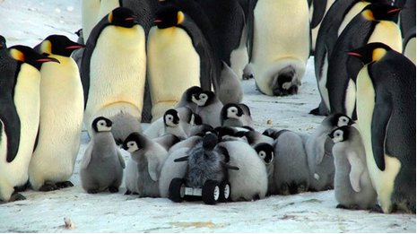 Robot - penguin